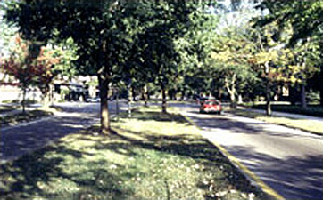 shaded neighborhood street with trees along the median