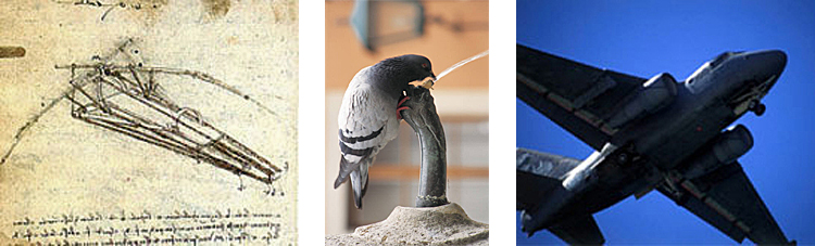 3 side-by-side images: left is Da Vinci's flying machine design, middle is a photo of pigeon drinking from a water fountain, and right is a photo of S-3B aircraft