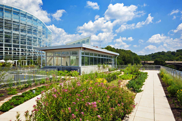 Green roof at the Center for Sustainable Landscapes