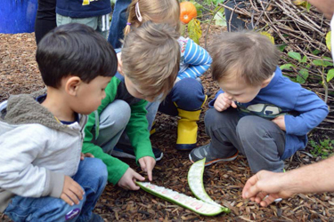 small children gathered in a garden examining a pod