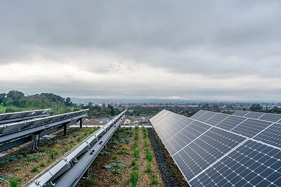 Rooftop PV and plantings at Sonoma Academy's Janet Durgin Guild and Commons
