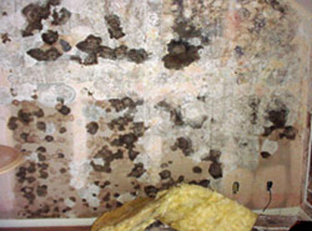Mold covering the wall of a new hotel in Honolulu, Hawaii