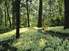 Peirce's Woods at Longwood Gardens, Kennett Square, PA