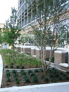 building on left with planting in front of it showing the condensate used to irrigate the landscape