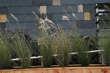 Photo of one wall of the home covered with thin-film PV panels behind a row of xeriscape plants