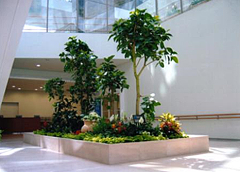 Atrium of a building featuring an island of plants