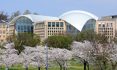 Institute of Peace building in cherry blossom season